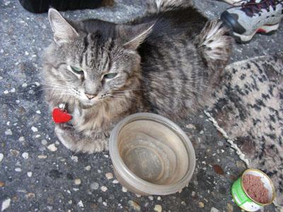 NY_cat_DSCN5821.jpg